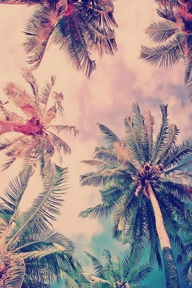 False Color Coconut Trees IPhone 6 Wallpaper 1 Picsay