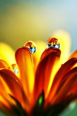 Kwiat kropli wody makro