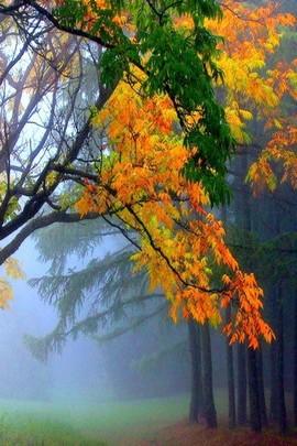Here Come The Autumn