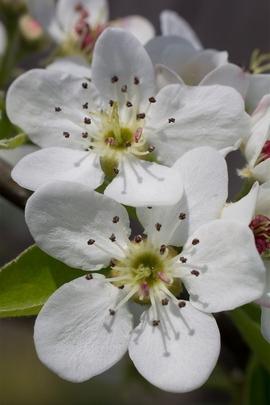 Bloss Flower