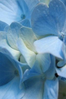 플라워 블루