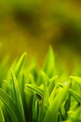 Green Macro Grass