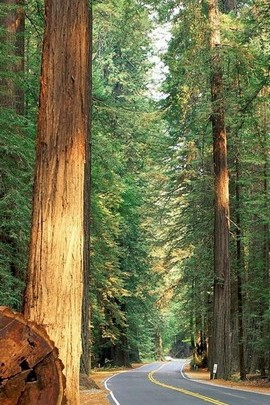 लाल लकड़ी वन पृष्ठभूमि