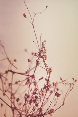 Nature Et Decouverte (89)