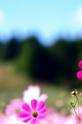Purplish Flower
