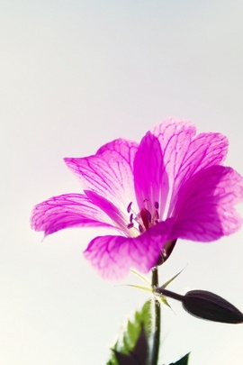 Petite fleur mauve macro