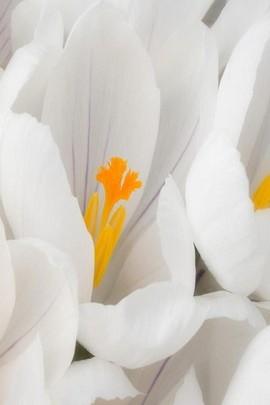 White Twisting Flowers