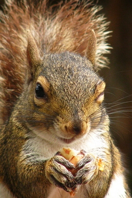 Wink Squirrel.