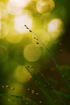 Green Leaf Copy
