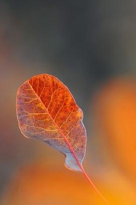 Yaprak Düşen