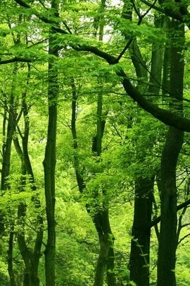 Nature Et Decouverte (212)
