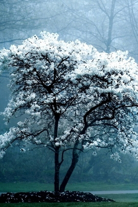Tree Spr