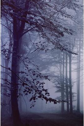 Sương mù buổi sáng