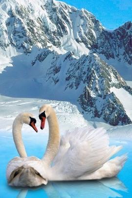 Fond Amour Couple Et Coeur (25)