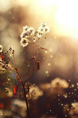 Little Flowers And The Sun Light