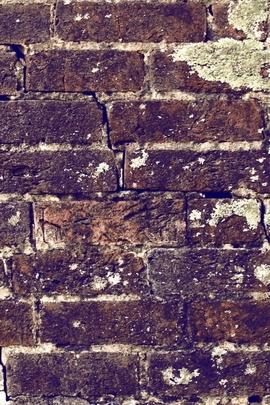 Duvar için Naturel (9)