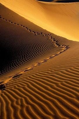 Namib Foothpath Desert