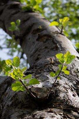 Tree Tru