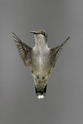 Bird94