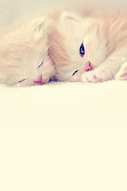 Sleeping Cute Kittens