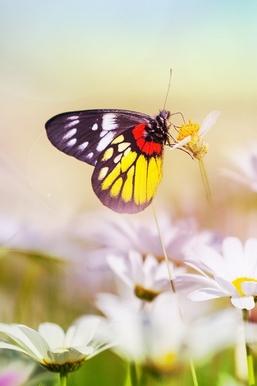 Papillon esthétique sur fleur