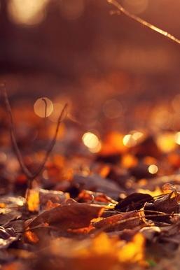 Sunny Fall
