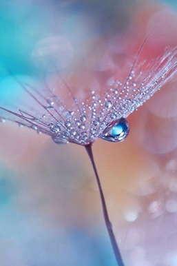 Alam yang Menakjubkan 9