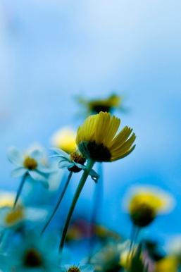 Natural Sunflower I