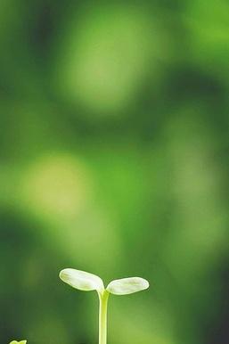 Vitality Plant