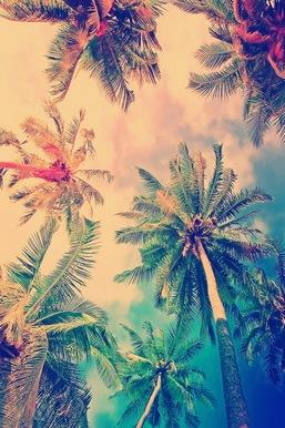 Pohon Kelapa Langit Wallpaper Download Ke Ponsel Anda Dari
