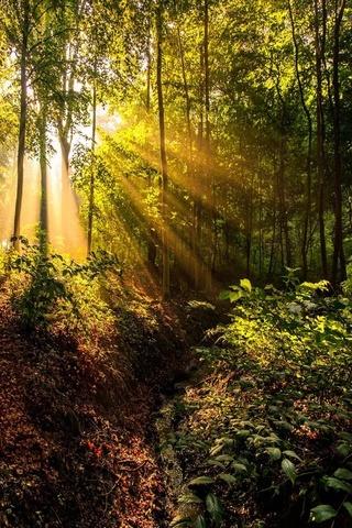 Leśne promienie słoneczne