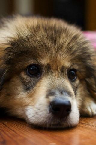 Puppies Baby Dog