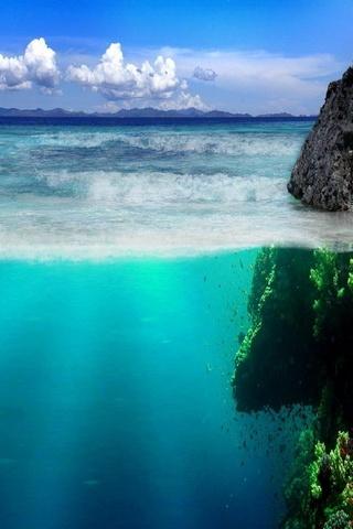 حياة المحيط