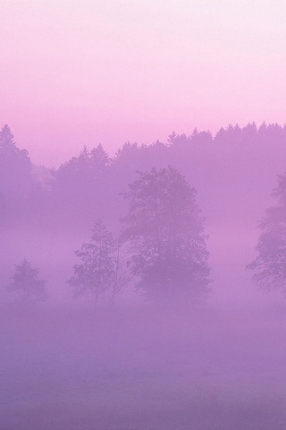 Misty Pink Forest