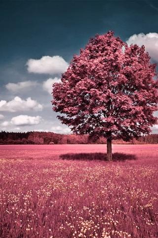 Pokok Merah