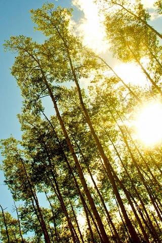 Under Gold Sun