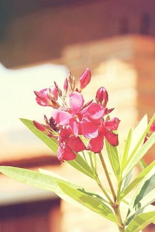 Fleur Nature