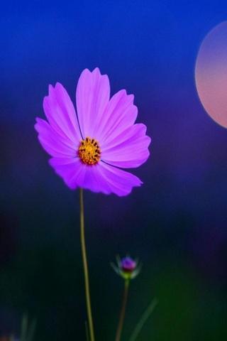 Purple Petals
