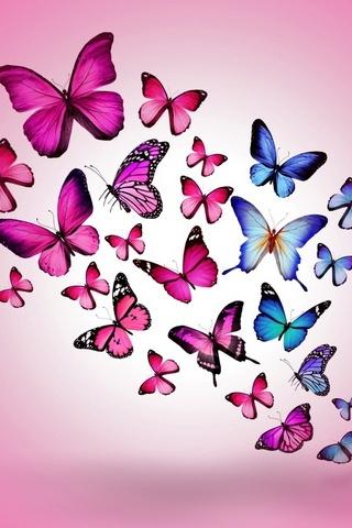 Pinky Butterflies