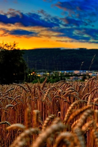 Wheat Field At Twilight