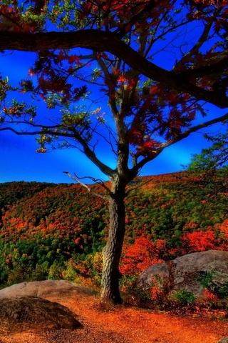 Autumn Forest Landscap