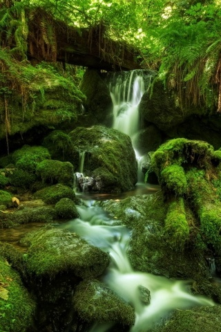 Waterfall Ferns Moss