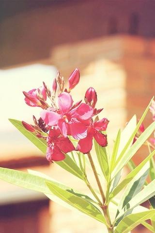 Природа Квітка