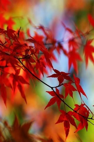 Kırmızı yaprak