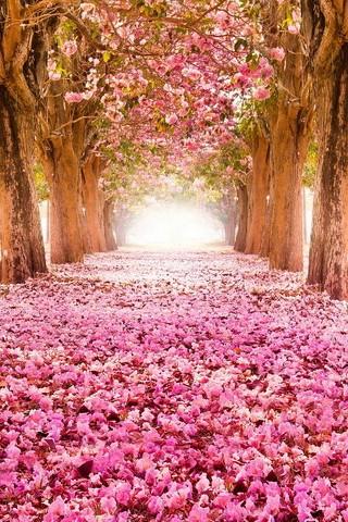 زهر الربيع
