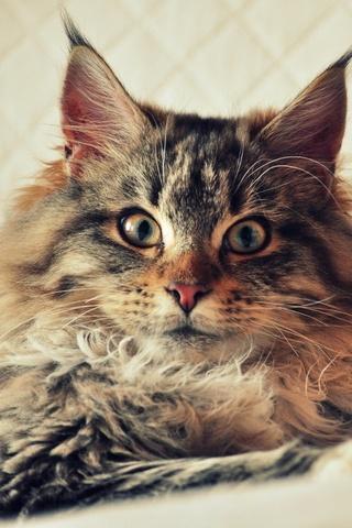 Scary Cute Cat