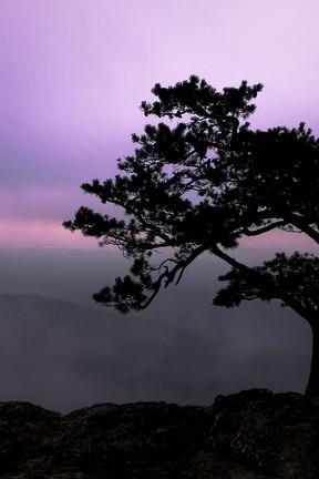 Mount Tree