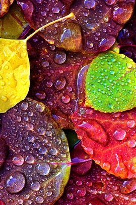 Drops On Colorful Leaves