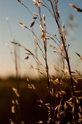 Природа Sunlight Weed