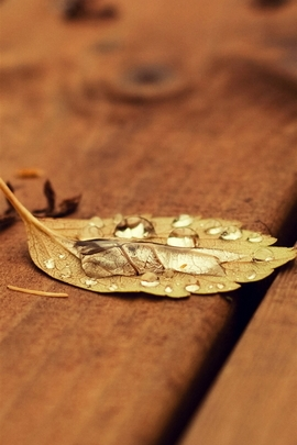 Fallen Leaf On Wooden Chair